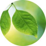 PLANT-KERATIN
